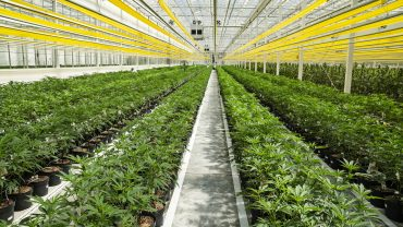 cannabis-watch:-aphria-ceo-says-$1-billion-black-market-for-vapes-is-its-largest-competitor
