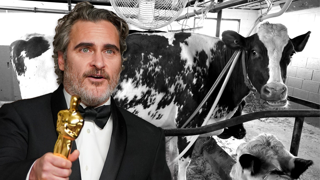 'we-feel-entitled-to-artificially-inseminate-a-cow-and-steal-her-baby.'-joaquin-phoenix's-oscar-speech-will-be-welcomed-by-america's-growing-army-of-vegans