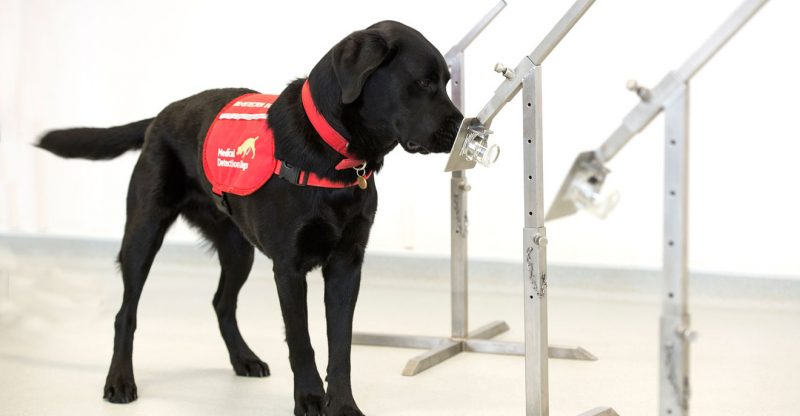 these-diagnostic-dogs-may-be-able-to-quickly-spot-people-with-coronavirus