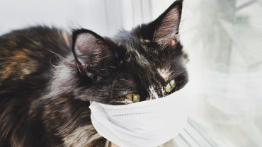 the-margin:-can-my-cat-get-coronavirus?-should-my-dog-wear-a-mask?-what-pet-owners-need-to-know-now-that-two-cats-tested-positive-in-new-york